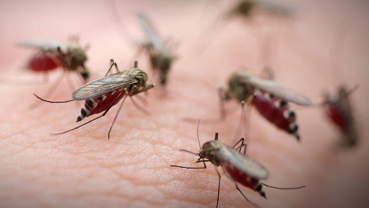 Losmosquitosson más que un fastidio