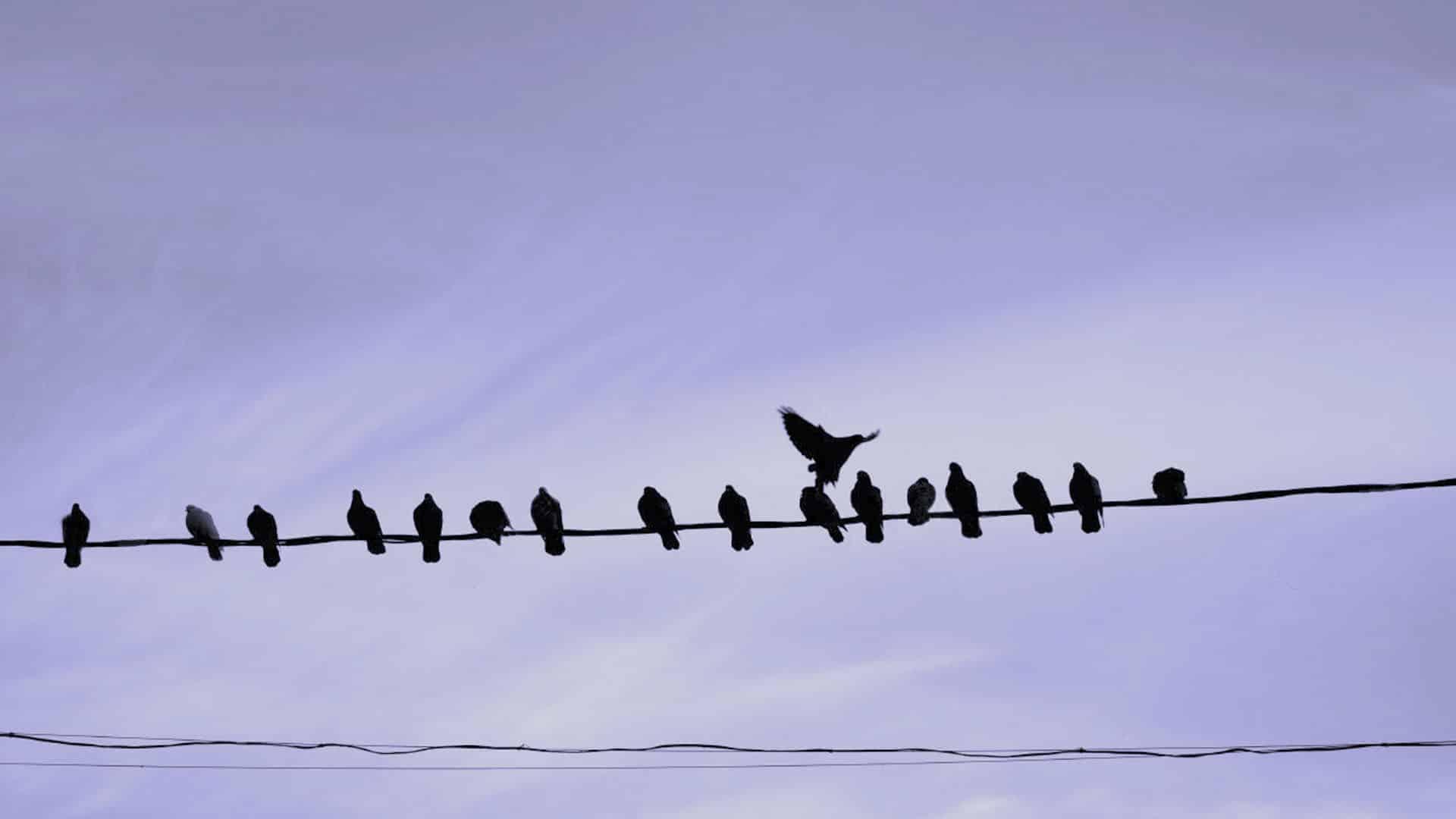 control de aves - Plagas&Control