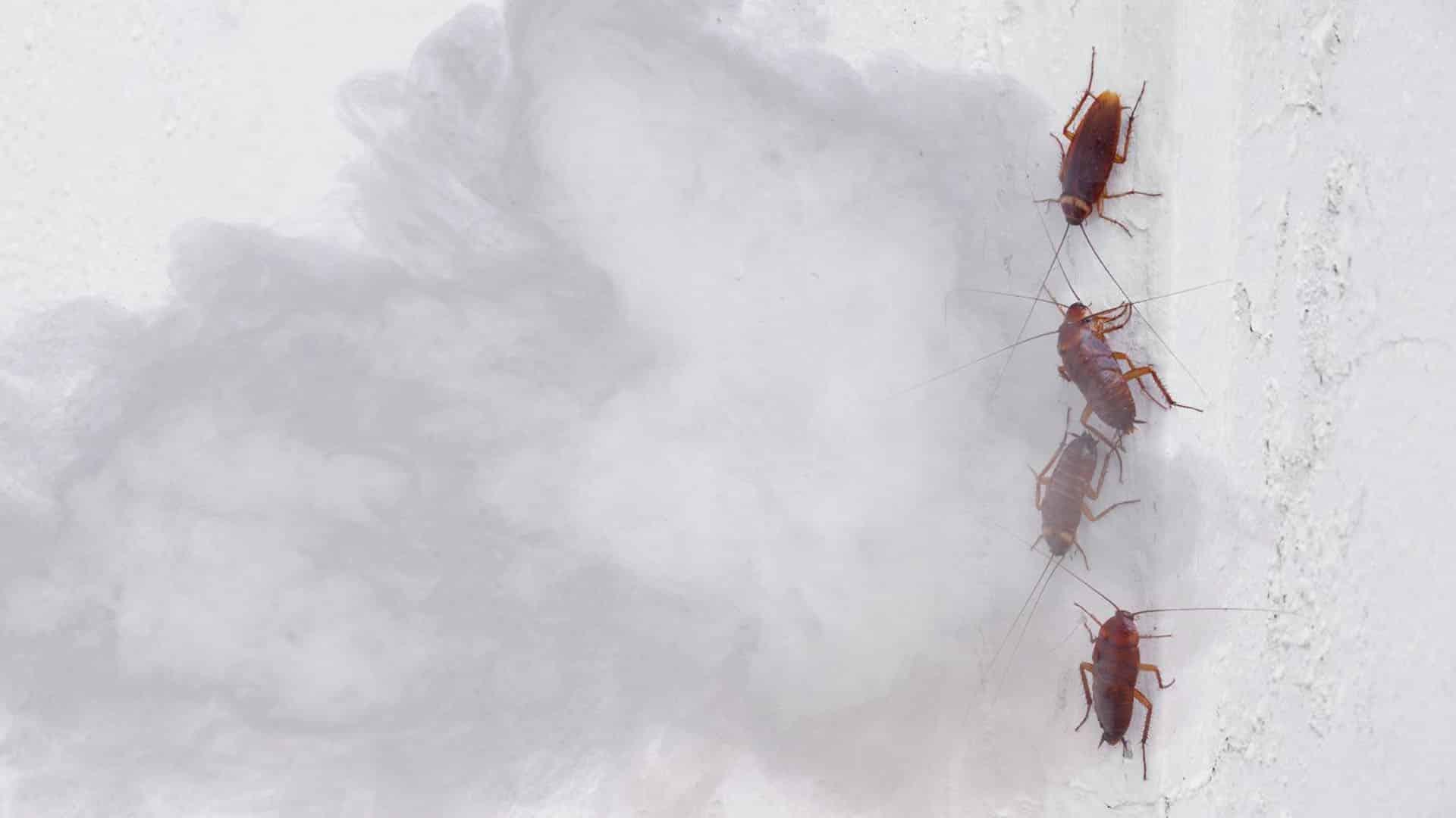 fumigar cucarachas - Plagas&Control